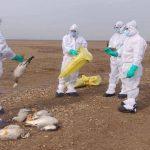 In Uttarakhand, bird flu has struck, samples in Kotdwar and Dehradun turned positive