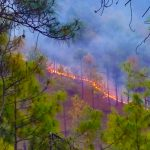 forest fire incidents Uttarakhand