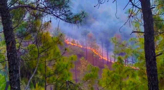 उत्तराखंड के जंगलों में आग की घटनाओं पर CM रावत ने बुलाई आपातकालीन बैठक, गृह मंत्री अमित शाह ने NDRF को दिए निर्देश